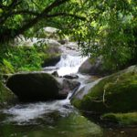 Fato consumado e tutela ambiental