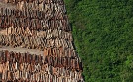 desmatamento amazonia 270