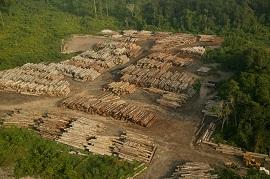 desmatamentoilegal 270