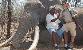 elefante 270
