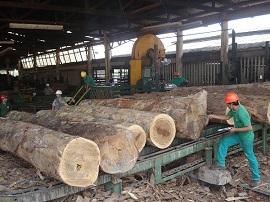 industria madeireira 270