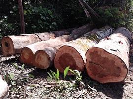 madeira apreendida 270