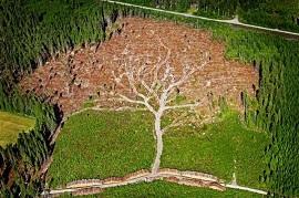 natureza subjetiva resp adm ambiental-270