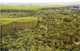politicas florestais-270