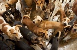 protetores de animais 270