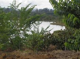 recuperacao ambiental 270
